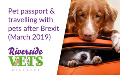 Pet passport & travelling with pets after Brexit (March 2019)