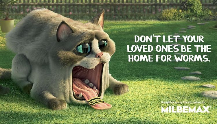 Don't Let Cats Suffer From Worms