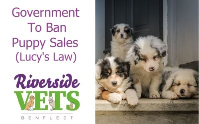 Government To Ban Puppy Sales (Lucy's Law)