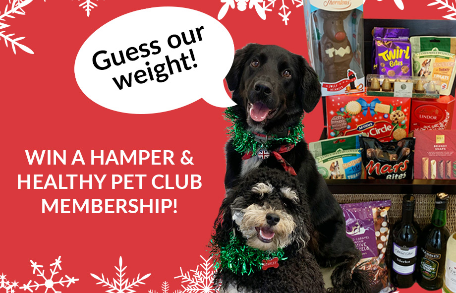 Win a Festive Hamper and Pet Club Membership