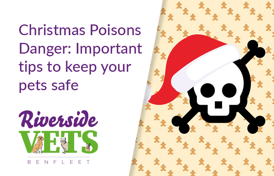 Christmas Poisons Danger: Tips to Keep Your Pets Safe