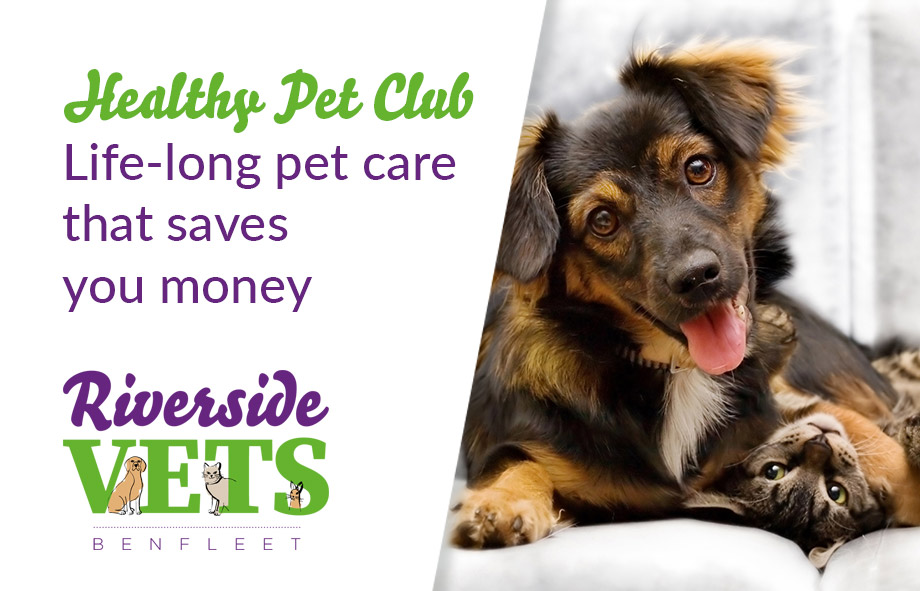 Benefits Of Joining The Healthy Pet Club