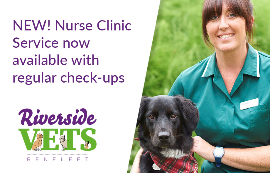 Keep Pets Healthy with Nurse Clinics