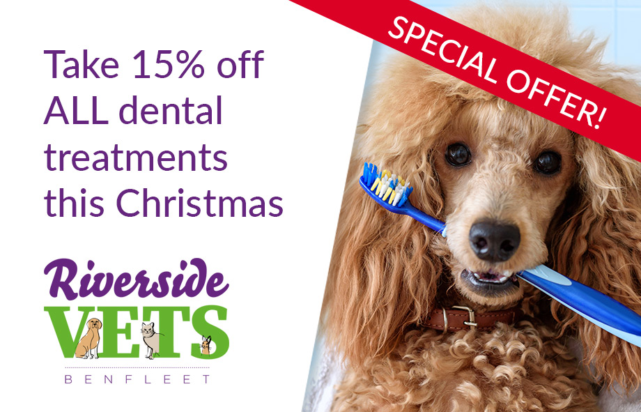 Special Offer – 15% off ALL Pet Dental Treatments