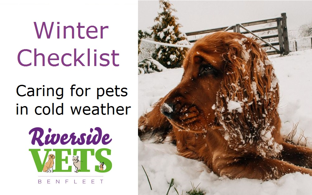 Winter Checklist – Pets & Cold Weather