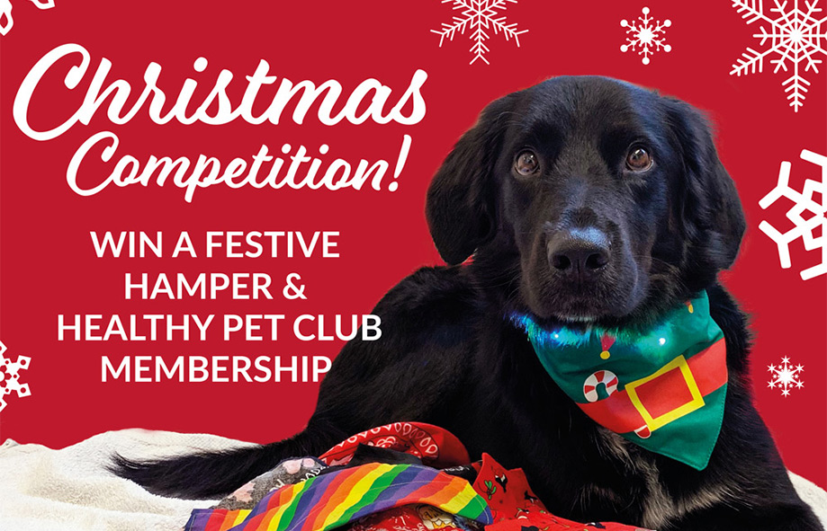 Christmas Competition – Win a Festive Hamper or Healthy Pet Club Membership!