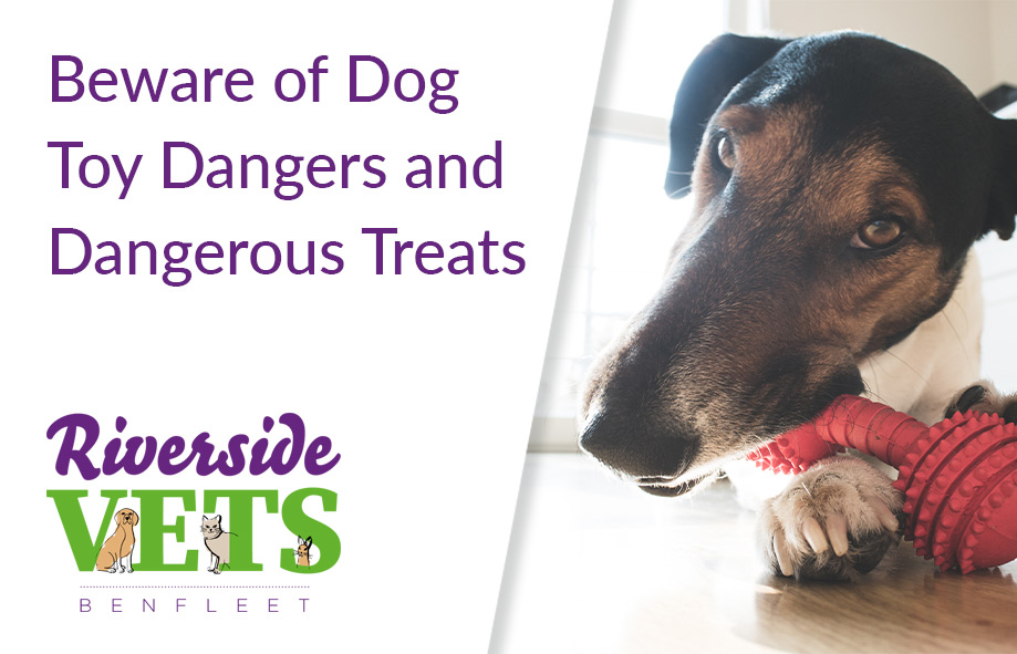Beware of Dog Toy Dangers and Dangerous Treats for Dogs