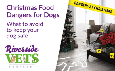 Christmas Food Dangers for Dogs – What to avoid to keep your dog safe