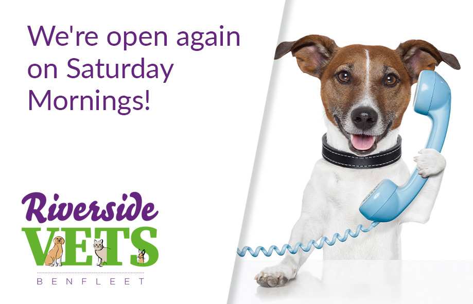 We're Open Again on Saturday Mornings!