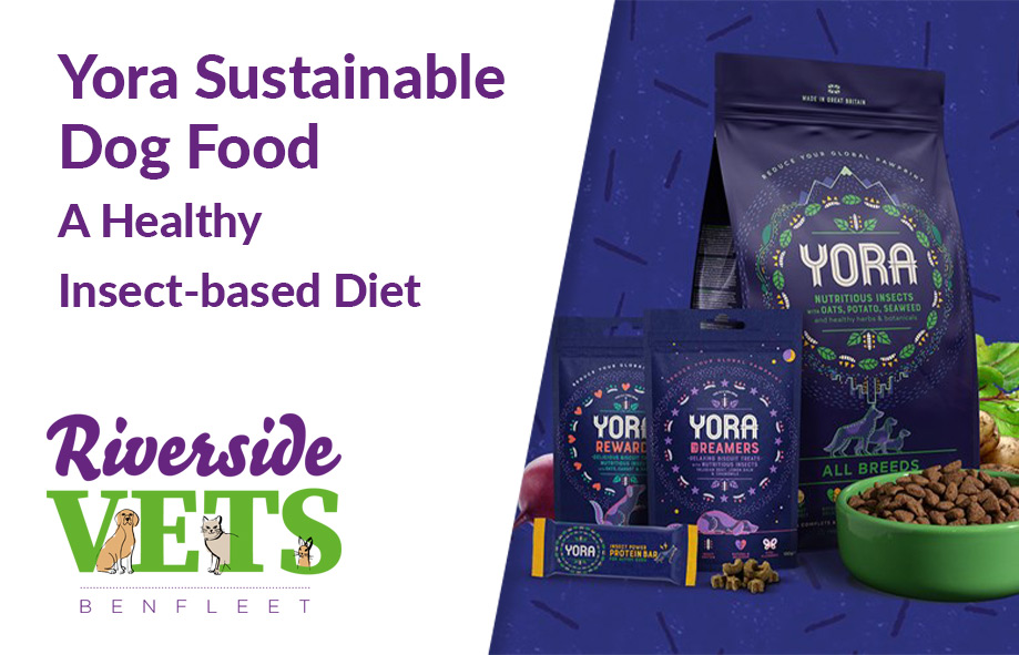 Yora Sustainable Dog Food | A Healthy Insect-Based Diet
