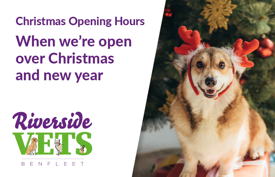 Christmas Opening Hours | When we're open over Christmas and new year