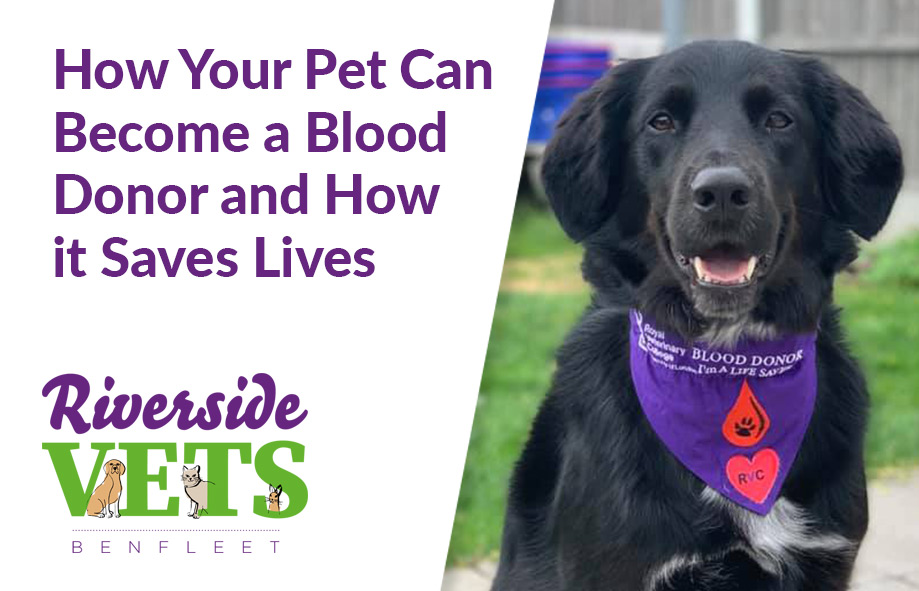 Our Spike is a blood donor. Can your pet help too?